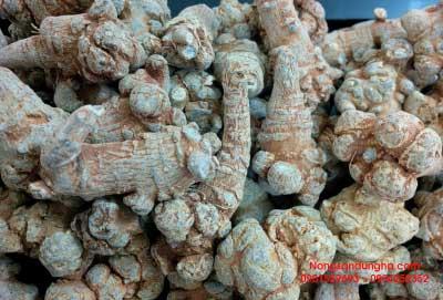 Mua tam thất khô giá rẻ tại Hà Nội