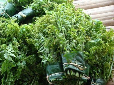 Món ăn hấp dẫn và tác dụng chữa bệnh tuyệt vời của rau dớn rừng