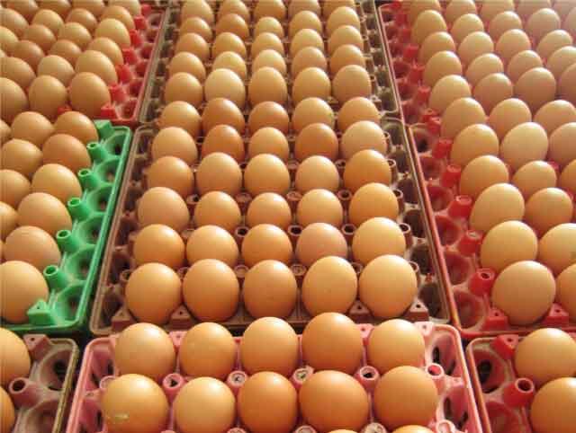 Trứng gà CN