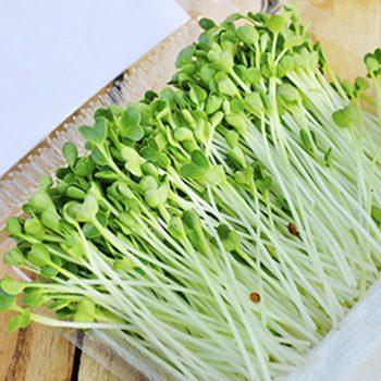 Rau mầm củ cải trắng Dũng Hà