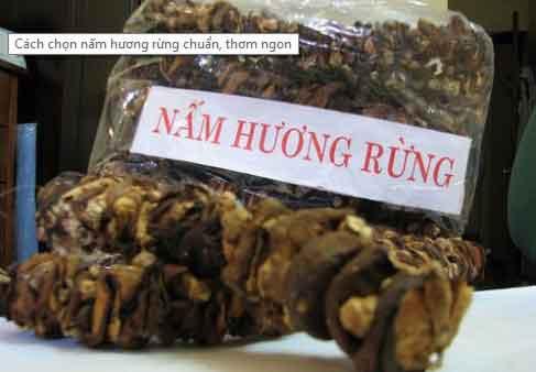 cach chon nam huong rung