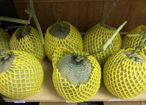 Dưa lưới Taka – Taki – One – Melon