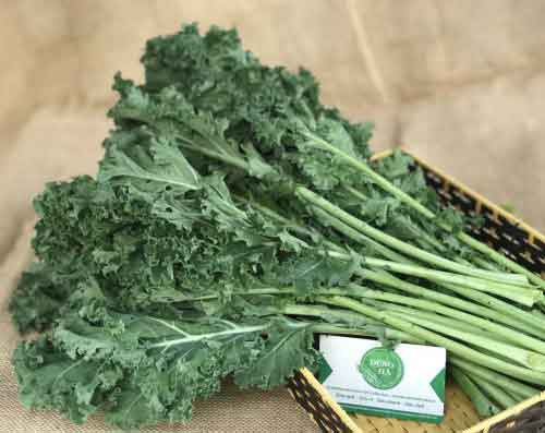 Rau cải xoăn xanh Đà Lạt (Cải Kale xanh)