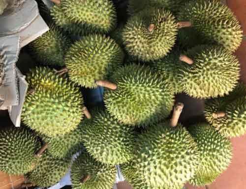 Sầu Riêng Ri6 – Thái Xuất Khẩu