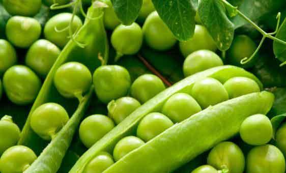 Hạt giống đậu Hà Lan gói 50g