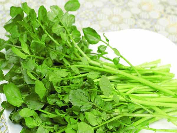 Hạt giống cải xoong gói tỷ lệ nảy mầm >95%