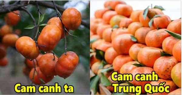 Bán cam canh tại đâu ở Hà Nội chuẩn giá tốt nhất