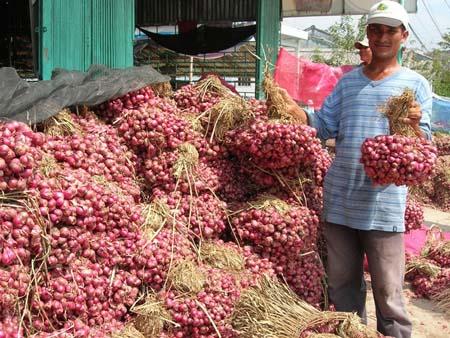 Đại lý thu mua nông sản - Kế hoạch phát triển nông sản trong tương lai