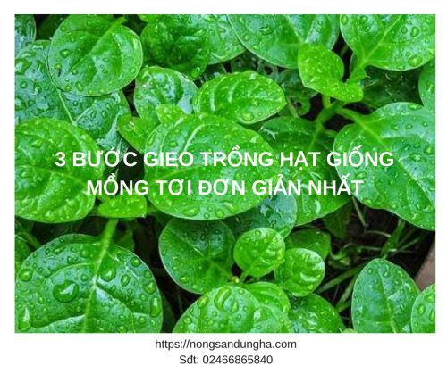 gieo trong hat giong mong toi 2018