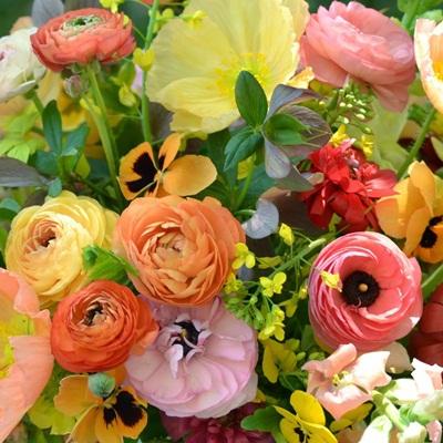 Hạt giống hoa hồng ri