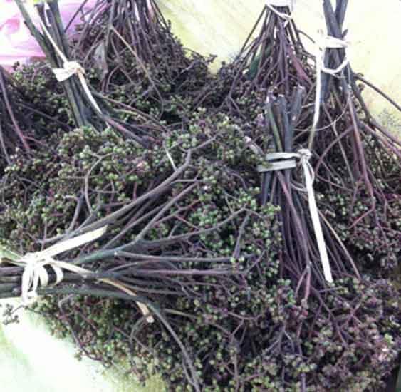Mua hạt mắc khén - Làm Chẳm Chéo ở đâu tại Hà Nội