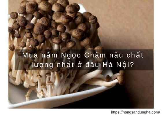 https://nongsandungha.com/wp-content/uploads/mua-nam-ngoc-cham.jpg
