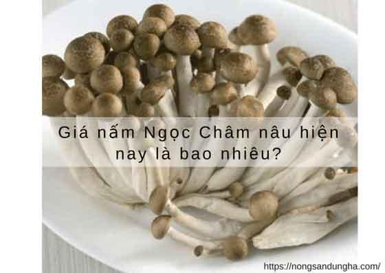 https://nongsandungha.com/wp-content/uploads/nam-ngoc-cham-gia-re.png