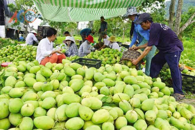 Quy trình thu mua nông sản của công ty nông sản Dũng Hà