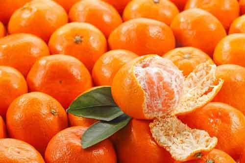Mua cam canh sỉ và lẻ chất lượng tại Hà Nội hiện nay ở đâu