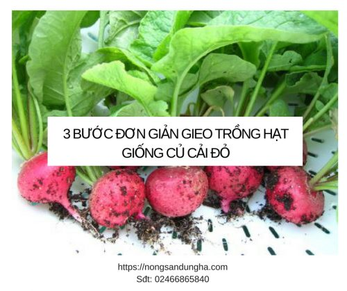 trong hat giong cu cai do 2018