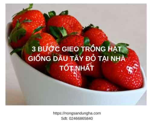 https://nongsandungha.com/wp-content/uploads/trong-hat-giong-dau-tau-do-2018-e1551404733168.png